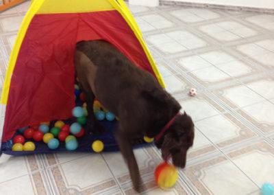 Creche para Cães na Zona Sul - Saúde - Diana´s - 1